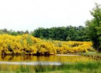 étang de La Martinière photo